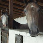 Hevosen lanta vihdoin energiakäyttöön