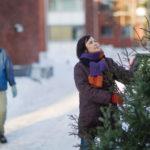 Osa joulukuusista päätyy keräykseen koristeiden kera