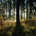 Suomen Biokierto ja Biokaasu ry kasvaa