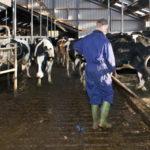 Biokaasun tuotanto nelinkertaiseksi