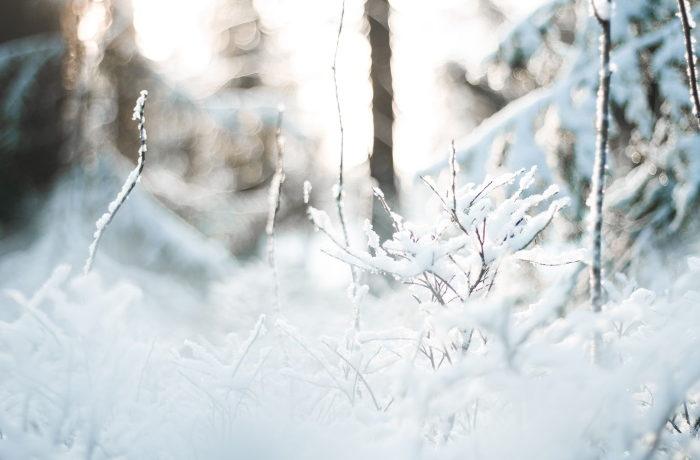 Luonnonvaraa eli metsä talvella