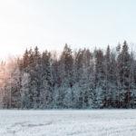 Tuhkasta ja kompostista metsälannoite