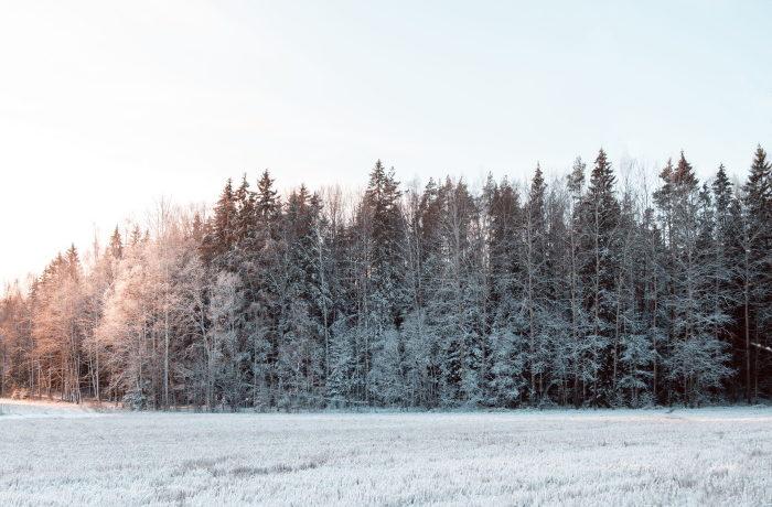 Metsät saavat ehkä pian uudenlaista kierrätyslannoitetta