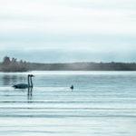 Tutkimus: Kiertotalous suojaa luontoa Suomessa