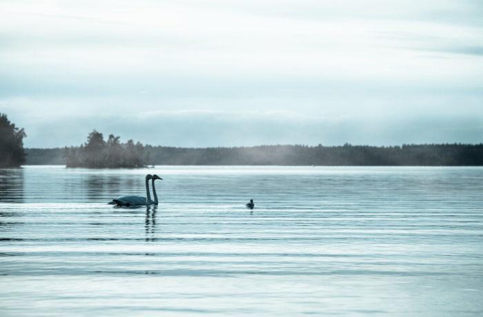 Suomalaista biodiversiteettiä