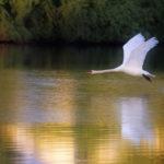 Green deal -sopimus jäteveden puhdistamiseen