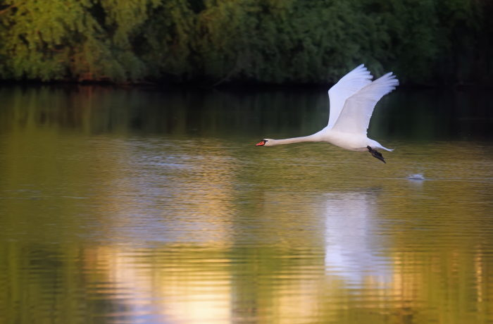 Jätevesien puhdistamisen sopimus parantaa ympäristön tilaa