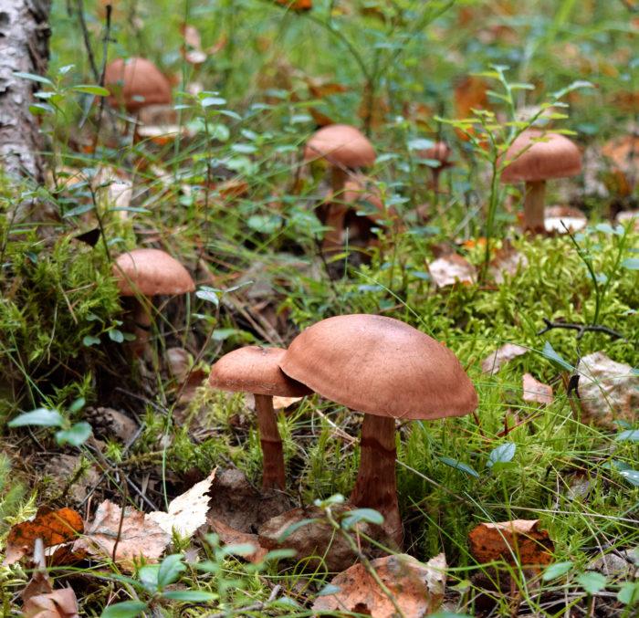 Perinteisesti värejä on saatu luonnon uusiutuvista raaka-aineista kuten kasveista ja sienistä.